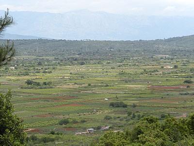 The fields of the Stari Grad Plain
