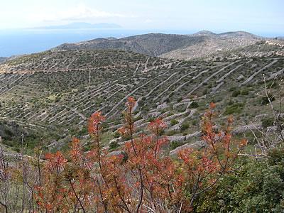 Dry stone walls on the hillsides of Hvar