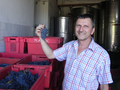 Antun Plancic with Darnekusa grapes