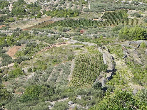 Path leads through vineyards and olive groves