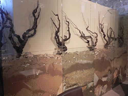 Old vines in the stony soil