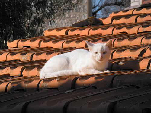 Cat on a hot tile roof