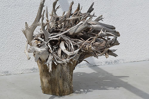 Olive tree root as artwork