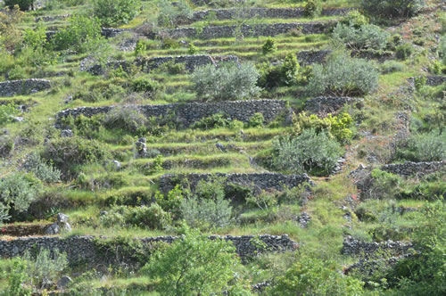 Terraced fields on fairly steep slopes