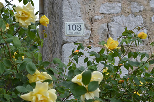 Numbered houses and roses!