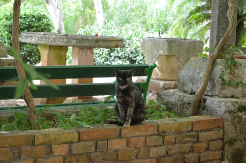 Shady garden with cat!