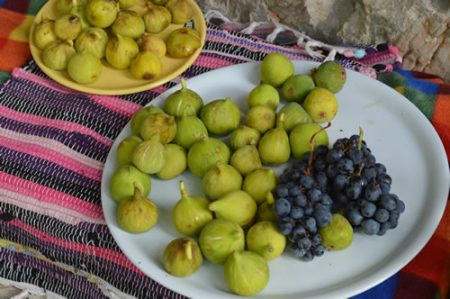 Freshly picked figs and grapes