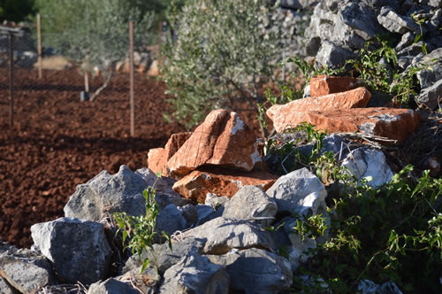 Rocks and olive trees