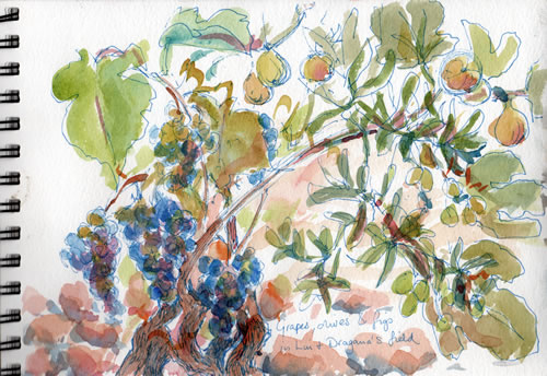 Rocks, grapes, figs and olives in Lui's field