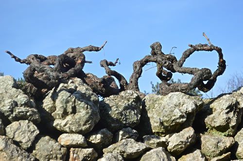Old vines trying to escape?