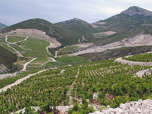 Miloš vineyards (from their website)