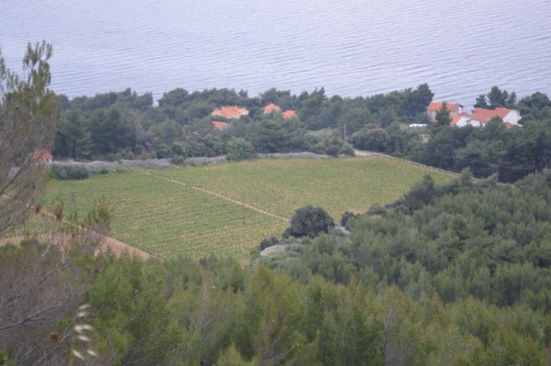 Carić vineyard on the south coast near Zavala