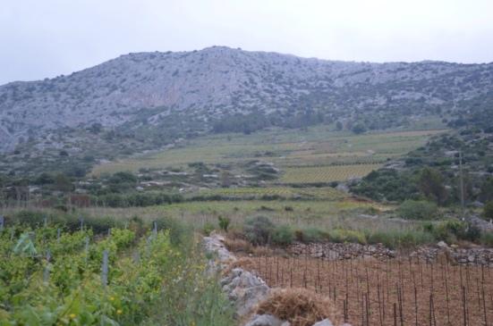 South slopes vineyards