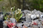 Miniature rock garden on top of a wall