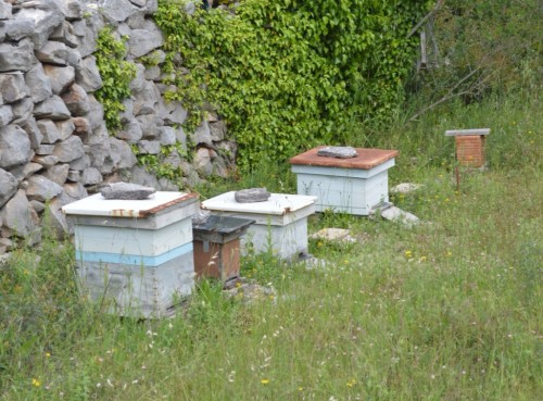 Great to see bee hives here too