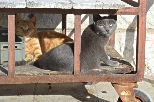 Cat cart, Jelsa
