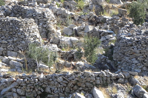 Olive terrace, Hvar