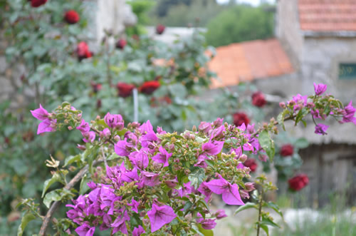 Flowers and red roofs