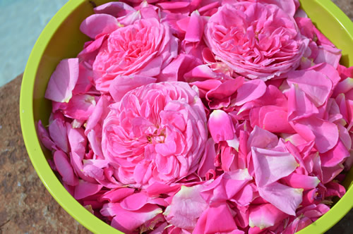 Bowlful of roses