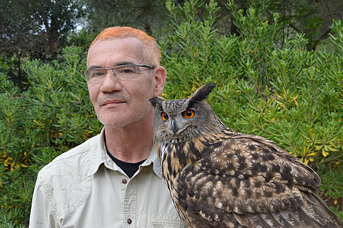 Raptor demonstration - eagle owl