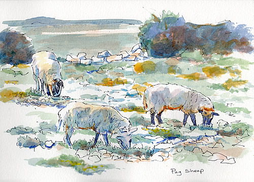 Sketch - Pag sheep