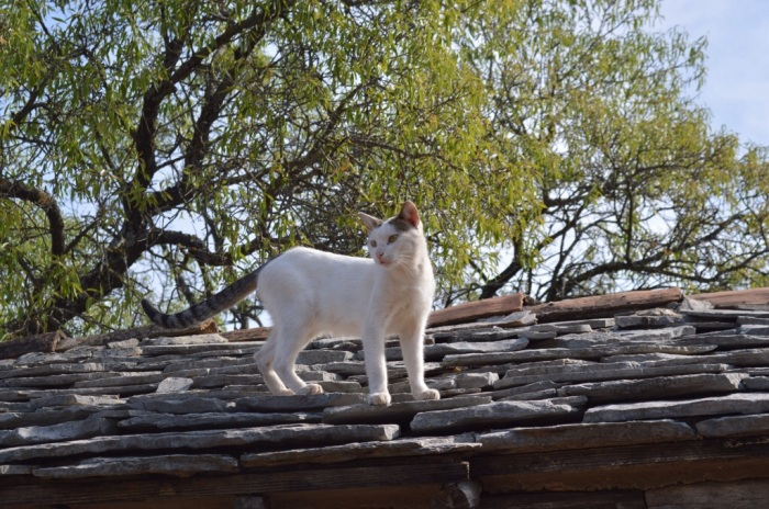 Cat on a stone roof