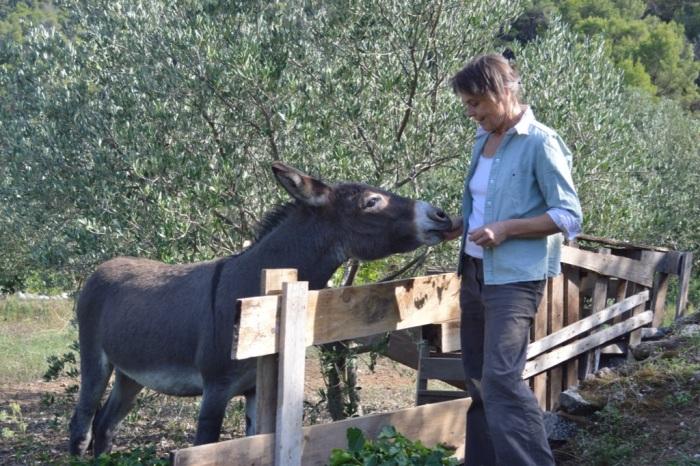 Friendly local donkey