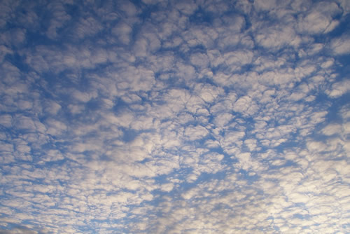 Altocumulus sheep/mackerel, courtesy of Wikimedia Commons
