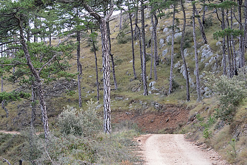 The road down through the pines