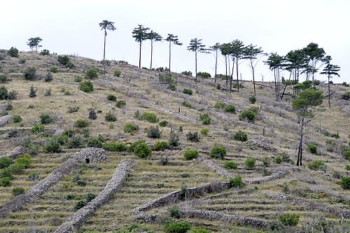 Hvar ridge with line of Dalmatian black pines