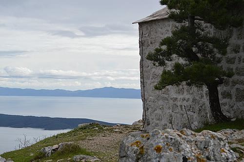 Black pine, Sv Nikola