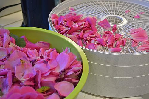 Dehydrating rose petals
