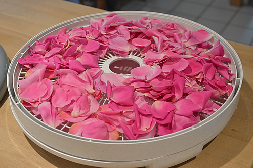 A layer of petals in the dehydrator