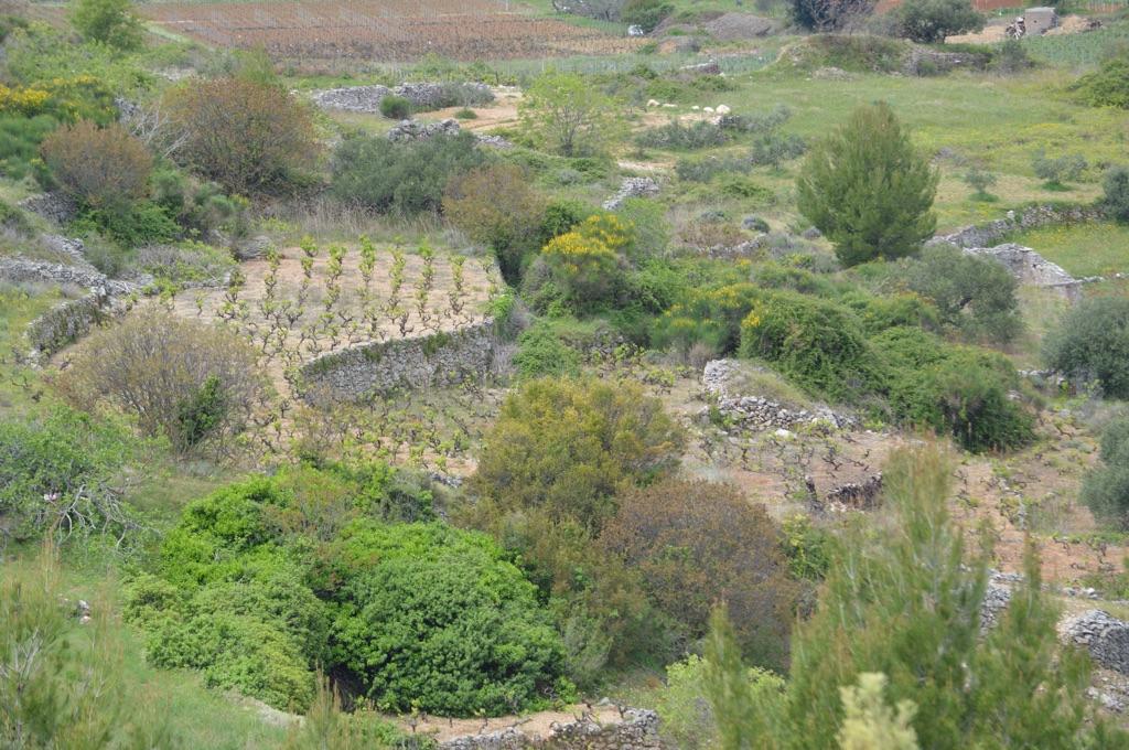 Terraces near Svirče