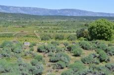 view over the Stari Grad Plain