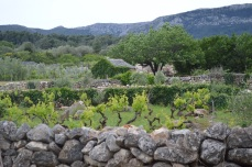 Stone walls and vines