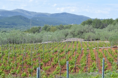 Vineyards and olive groves