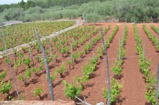 Rich red soil on the plain