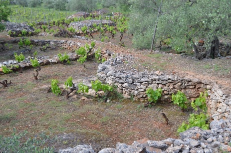 Drystone walls protect the vines