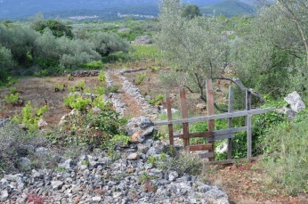 Vines and olives are traditional crops