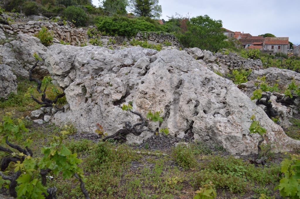 Rocky vineyard