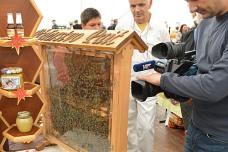 Bee-keeping display being filmed