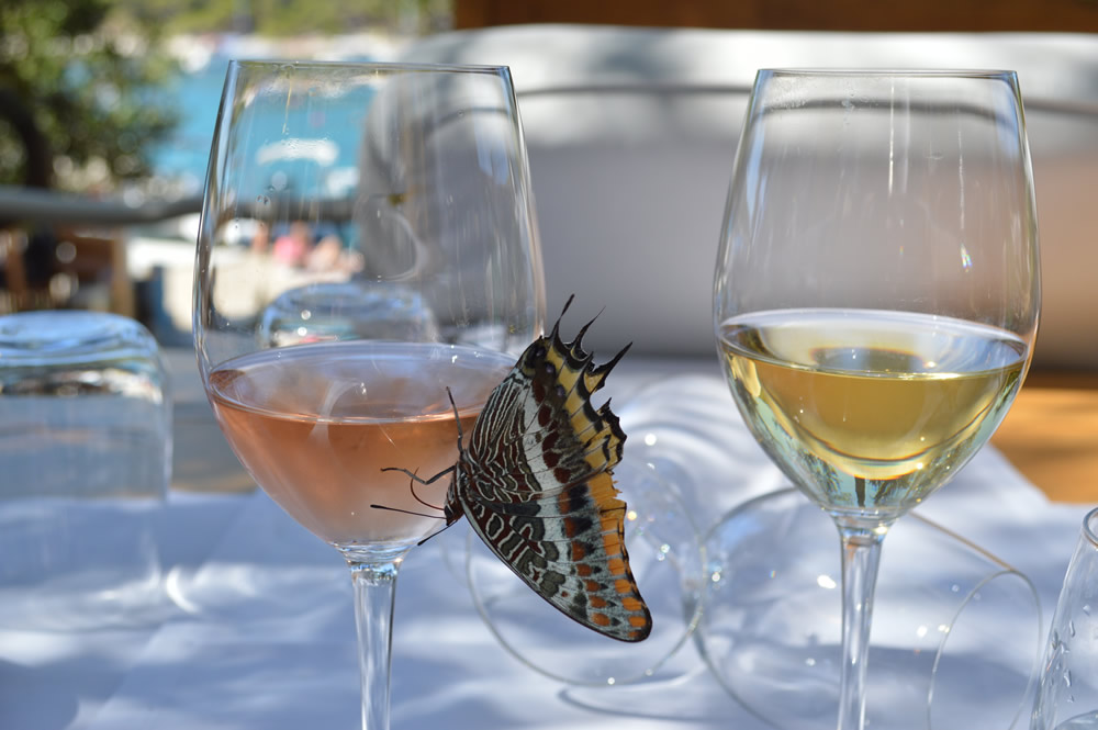 Butterfly on the wine glass