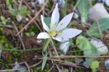 Hvar's wildflowers and plants inwinter