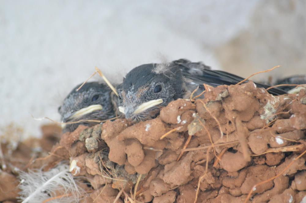 Alert chicks!