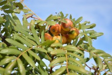 Unknown fruit!