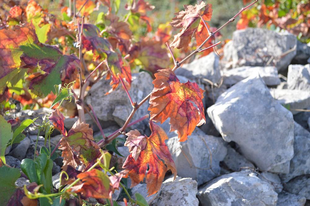 Turning to autumn