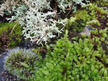 Mosses and lichens - miniature landscape
