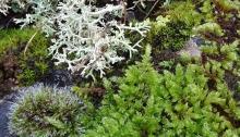 Mosses and lichens - miniature landscape