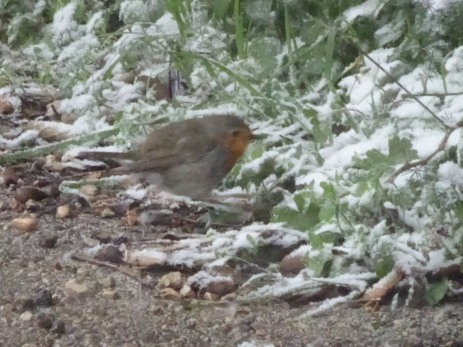 Hopping robin